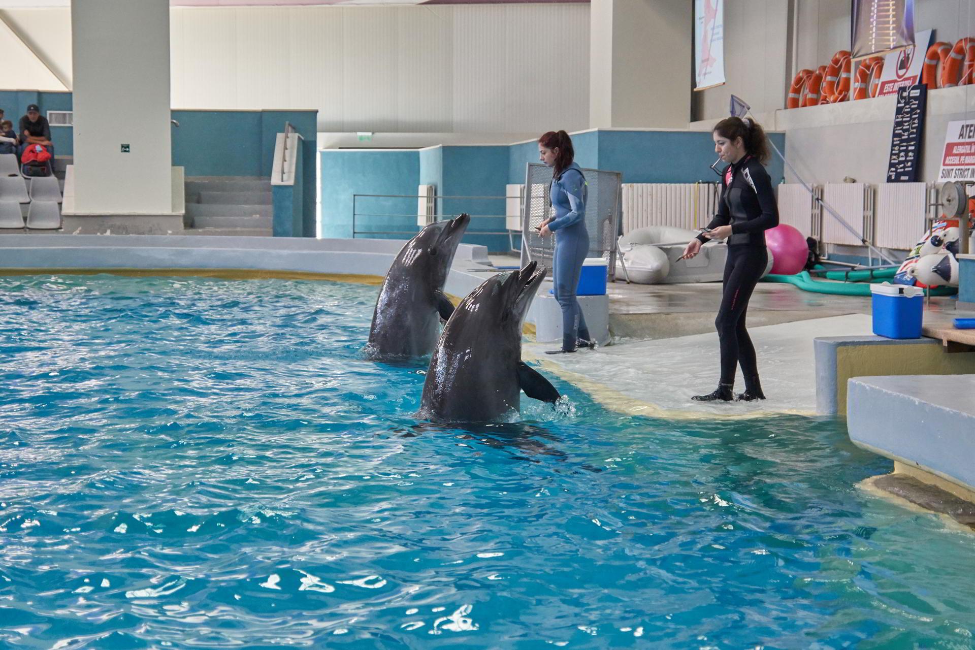 Delfinii si leii de mare asteapta aplauze si in sezonul rece