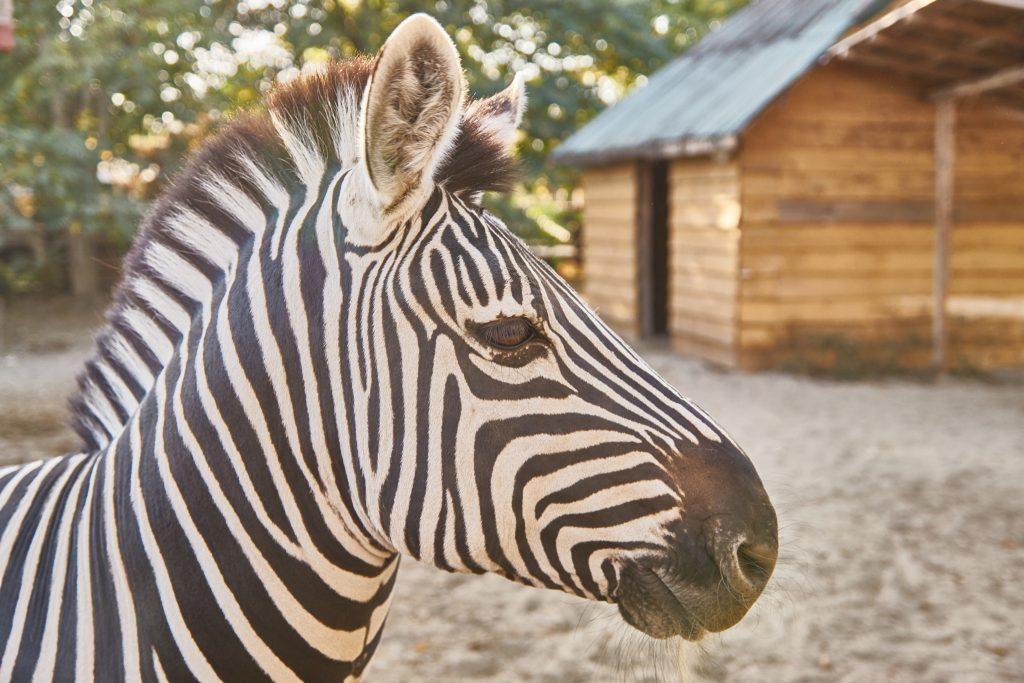 Zebra microrezervatie
