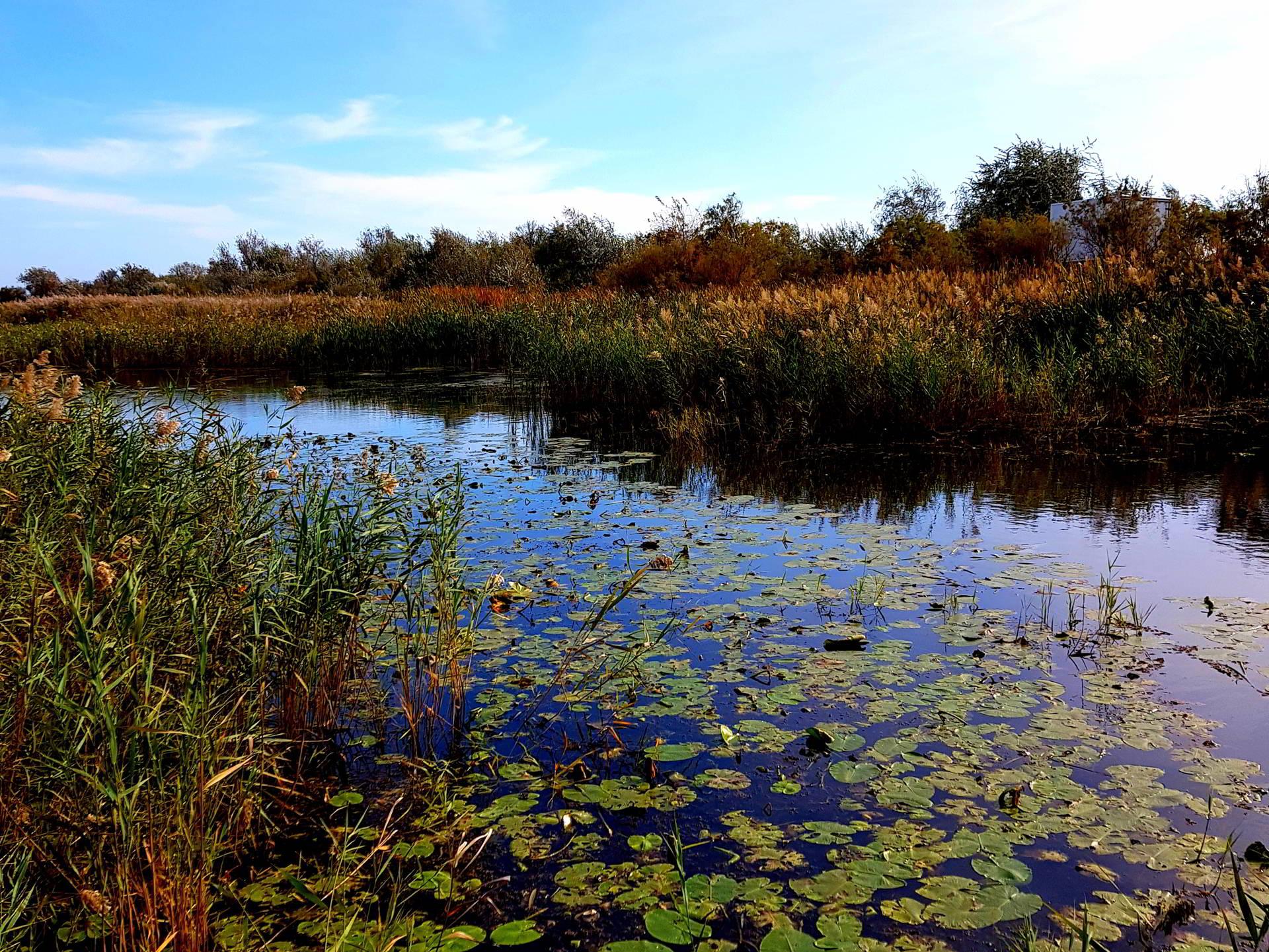 Proiecte pentru Delta Dunării, de Ziua Mondială a Rezervațiilor Naturale