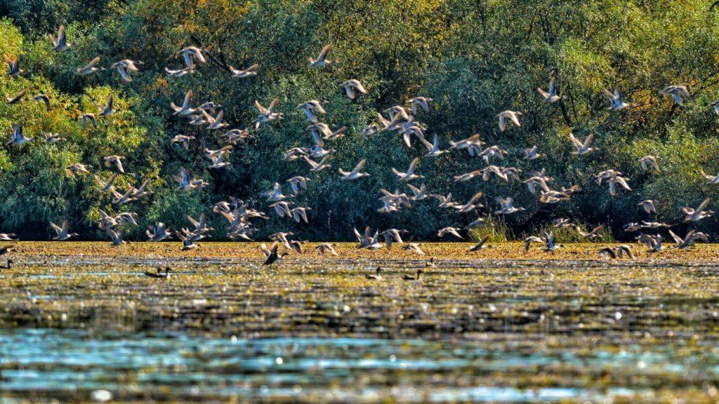 Delta Dunarii pasari