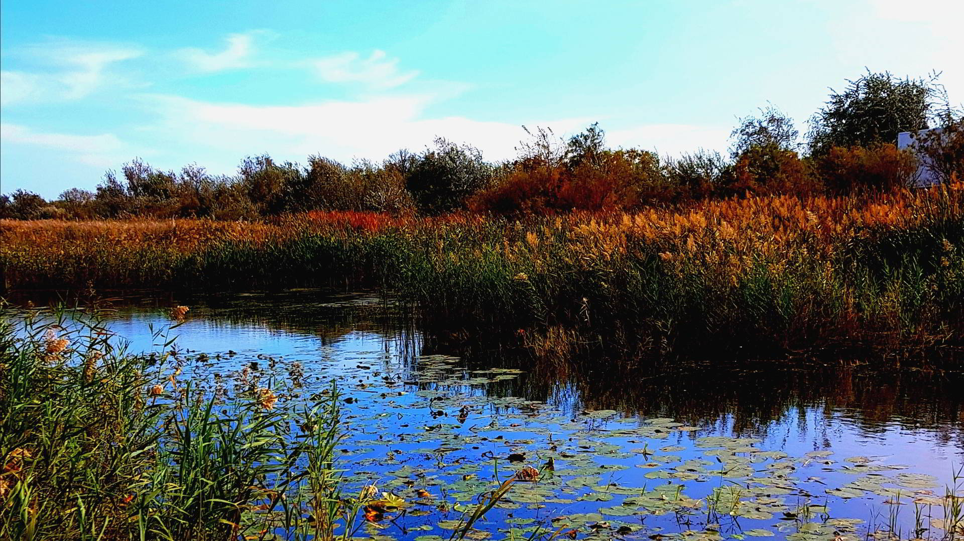 5 plante salbatice din Delta Dunarii – delicatese pentru francezi, hrana pentru pescari si ciudatenii gustoase pentru turisti
