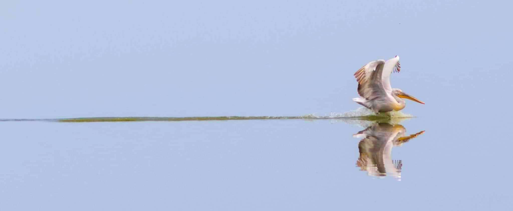 Sezonul turistic în Delta Dunării se deschide odată cu sosirea păsărilor migratoare