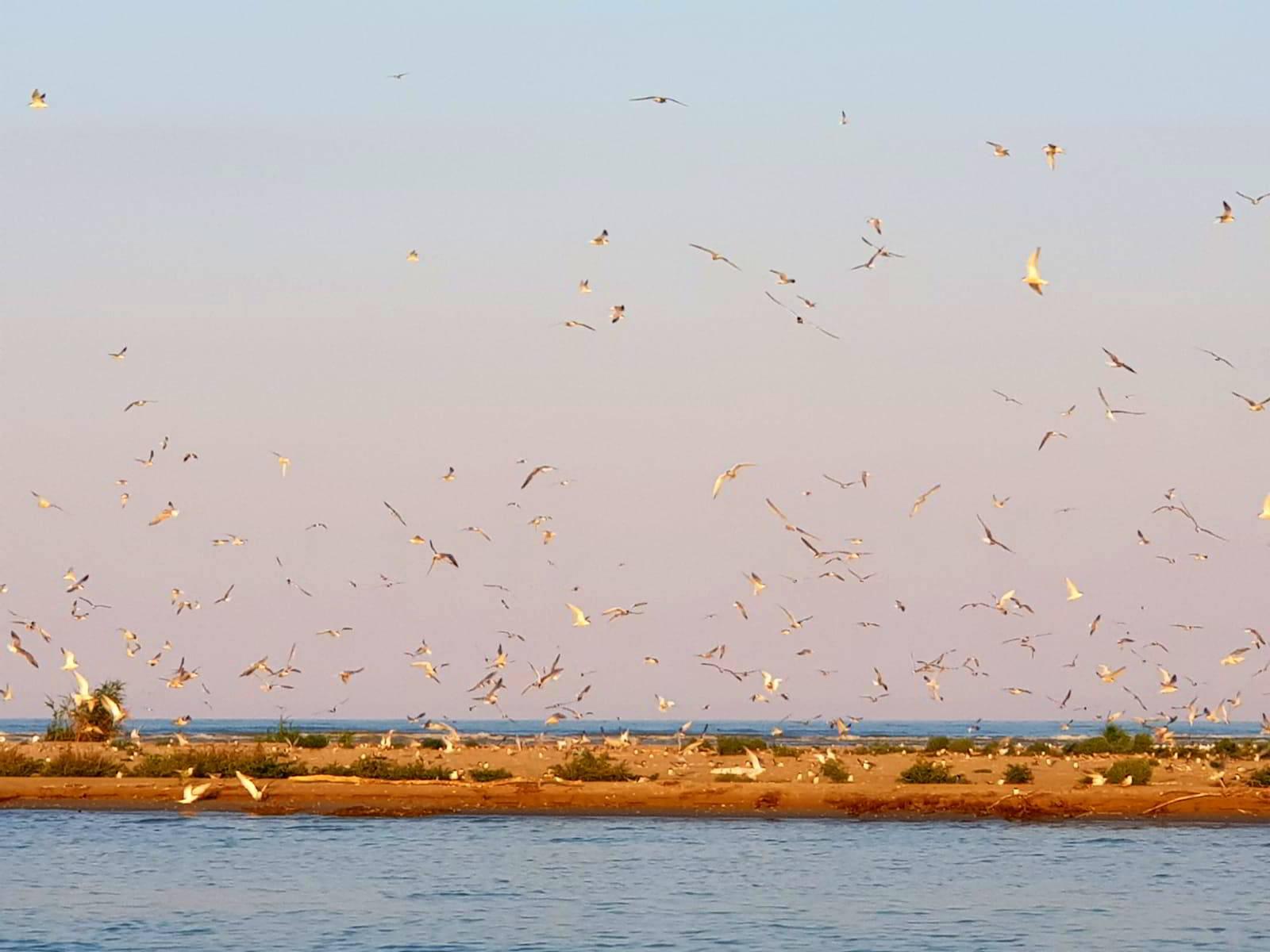 Insula K, un habitat natural în care cuibăresc zeci de specii de păsări