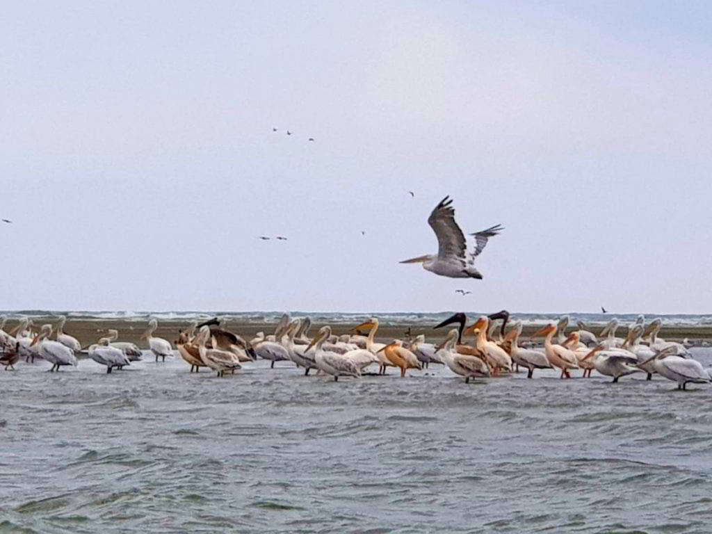 Insula-K-insula-pasarilor