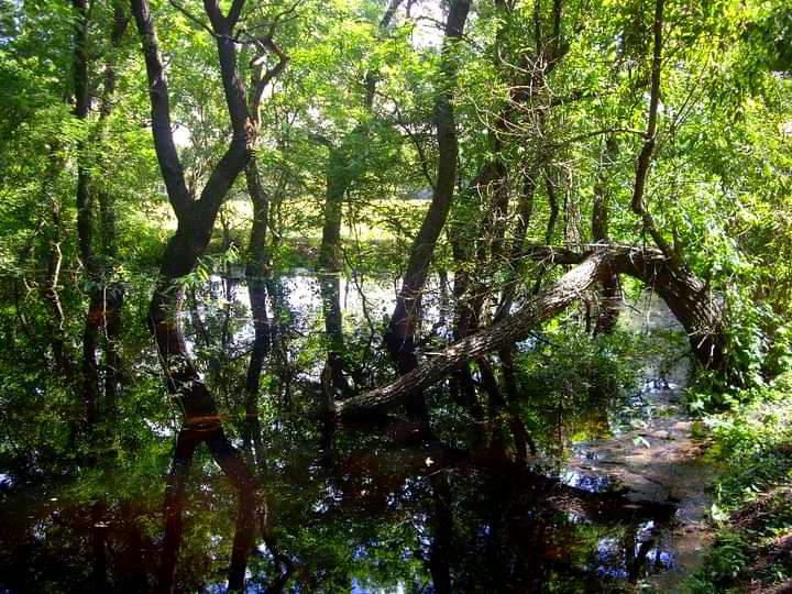 Padurea Letea Delta Dunarii