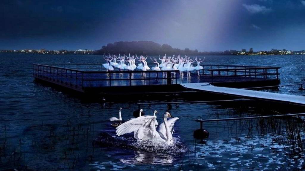 Lacul lebedelor pe lac in Ovidiu