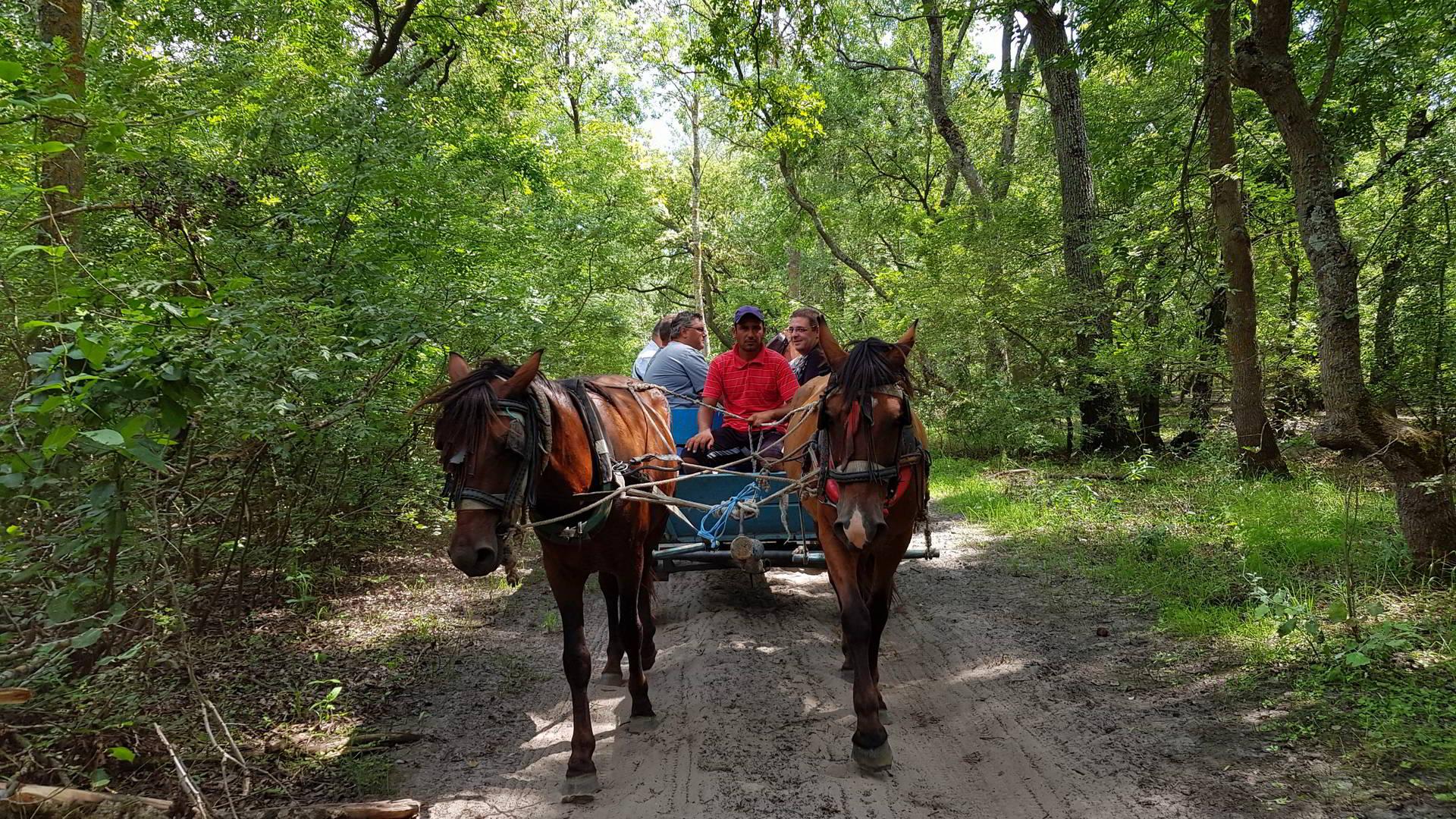 Letea, satul în care trăiesc mai mulți cai decât oameni