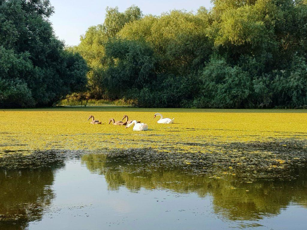 mirajul-deltei-dunarii-ii-atrage-ca-un-magnet-pe-turisti