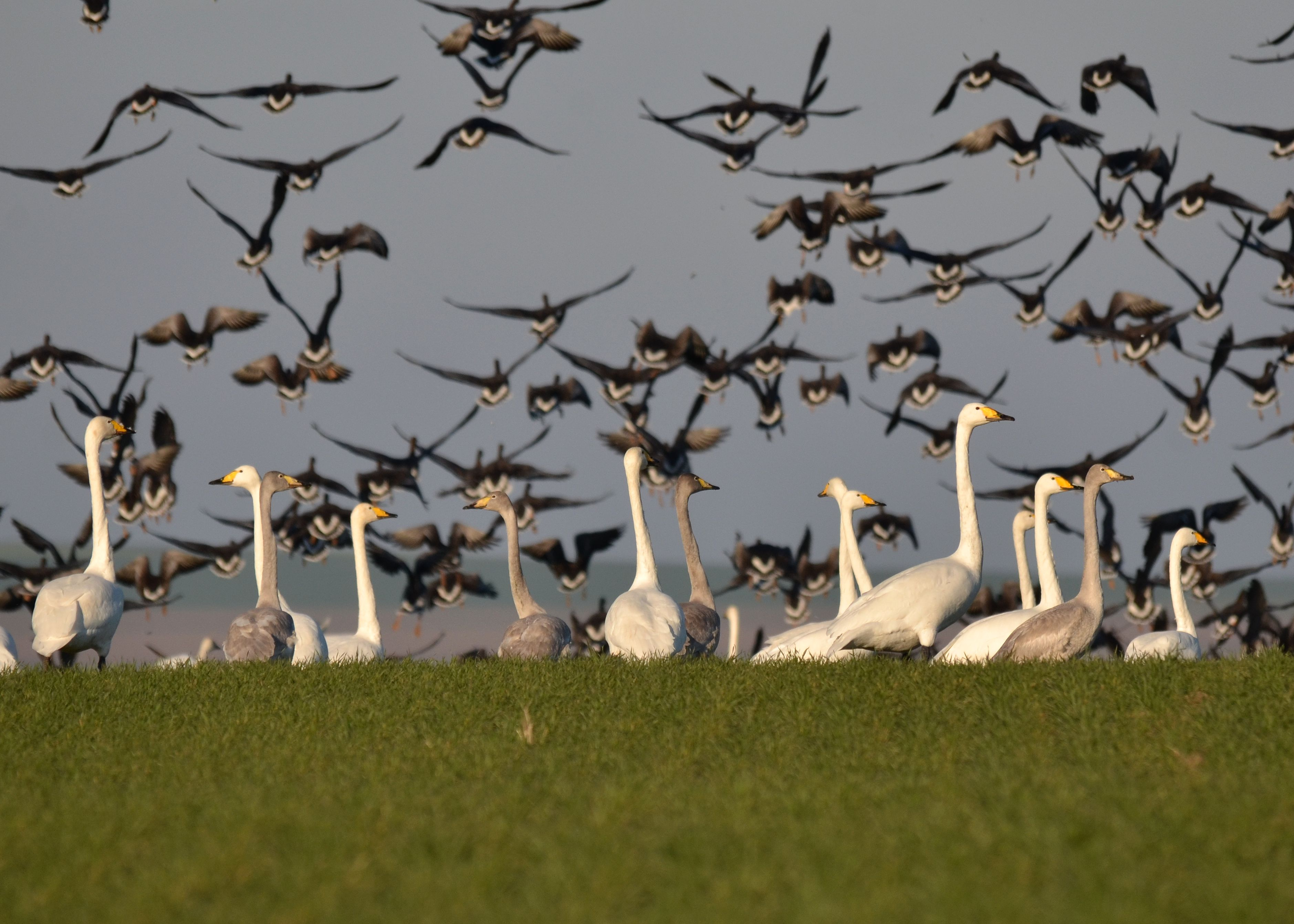 Migrația păsărilor poate fi observată în Dobrogea, în acestă toamnă