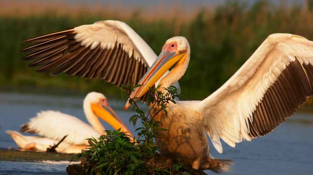 Migrația păsărilor va începe în curând în Dobrogea