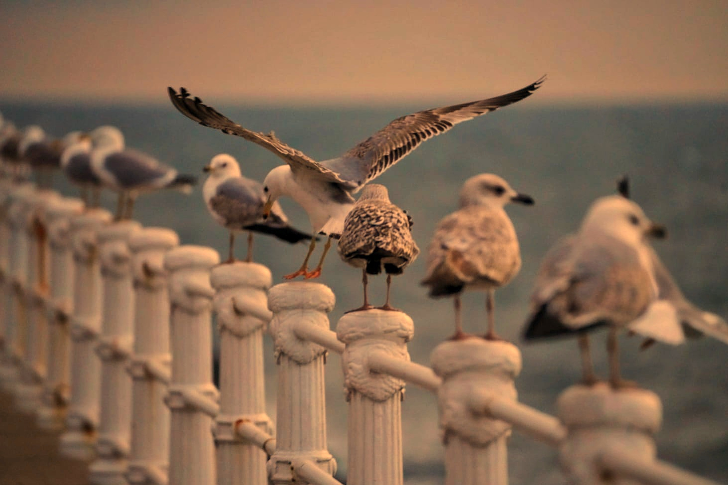 Păsările din Delta Dunării cuibăresc în liniște în această primăvară