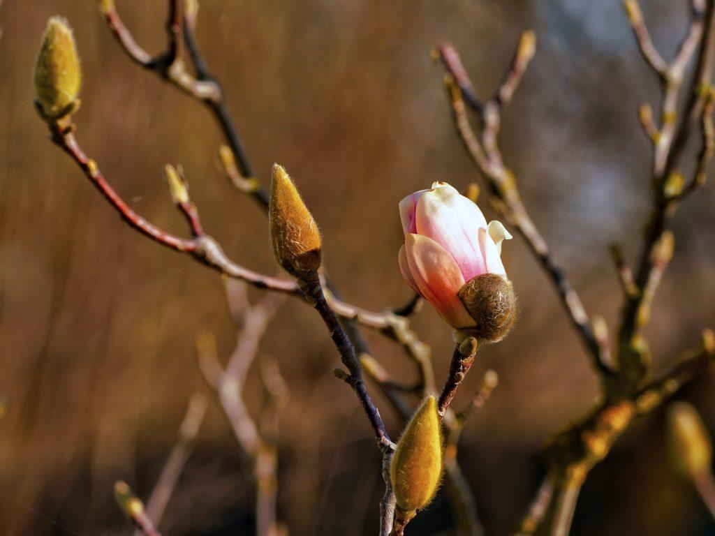 Florii traditii