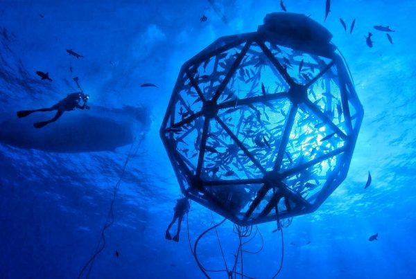 ferme-marine-piscicole-offshore