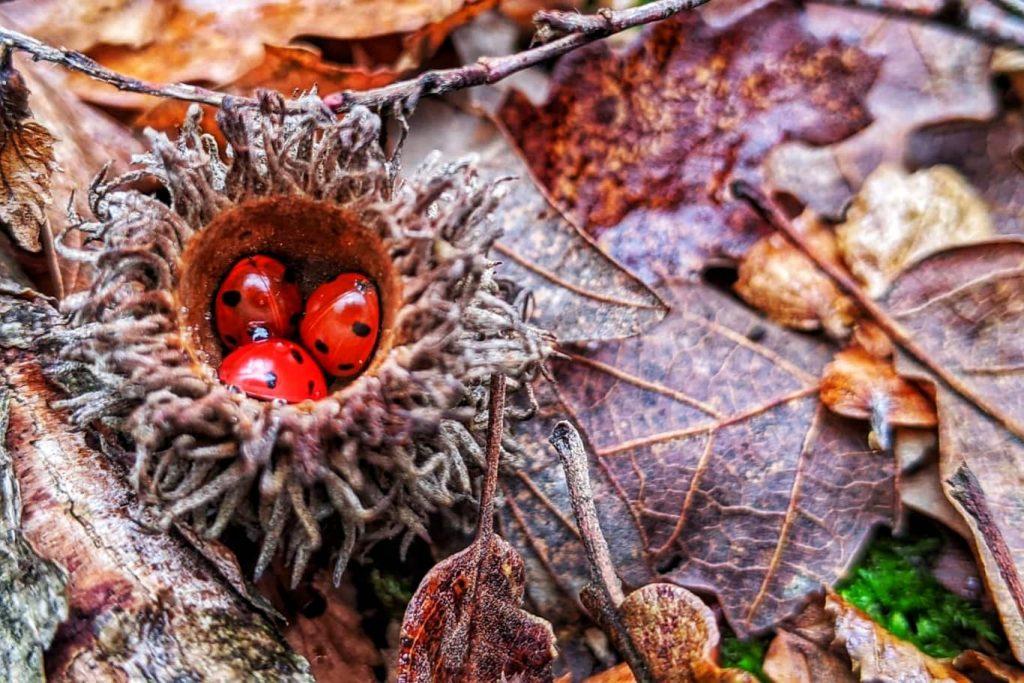 ianuarie-in-padurile-din-dobrogea-gargarite-in-hibernare