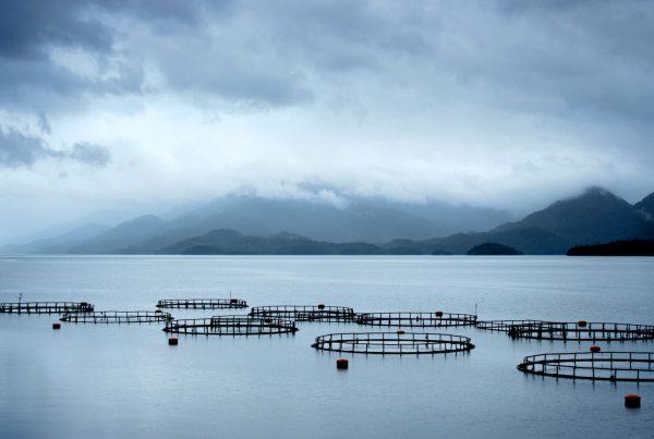 acvacultura-offshore-marea-neagra