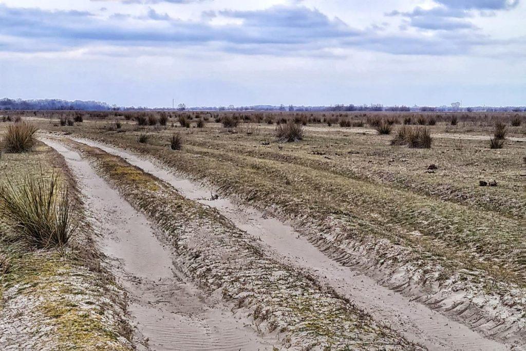 drumul-pe-grinduri-spre-rezervatia-proteajta-letea