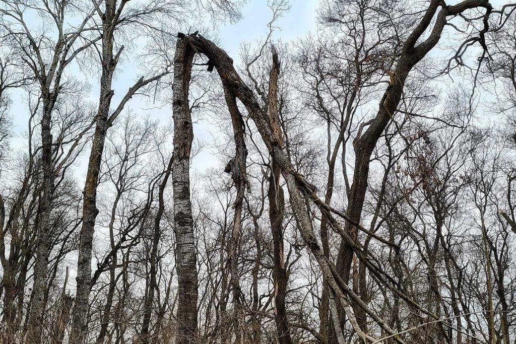 copaci-padure-letea