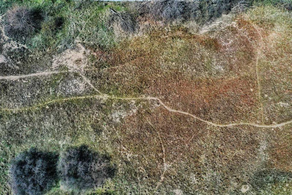 dunele-marine-de-la-agigea-rezervatie-naturala