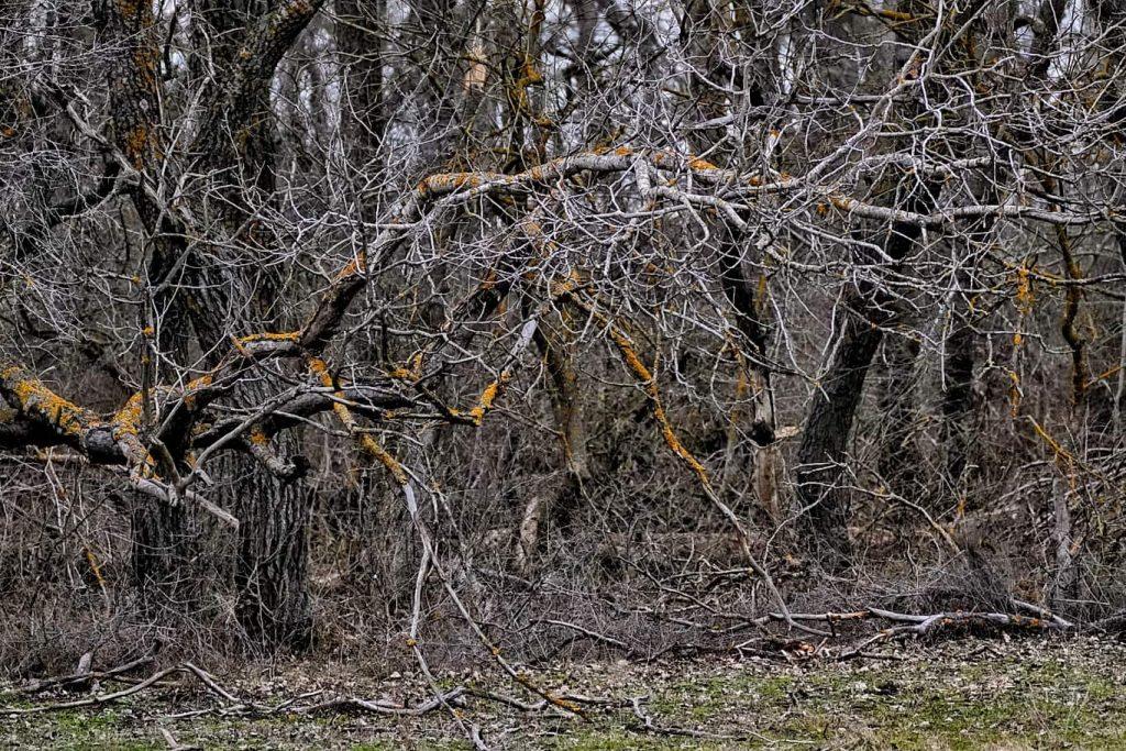 copaci-padure-leteea
