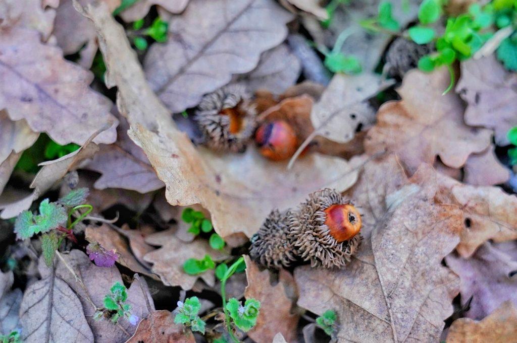 muntii-macinului-biodiversitate-rezervatii-naturale