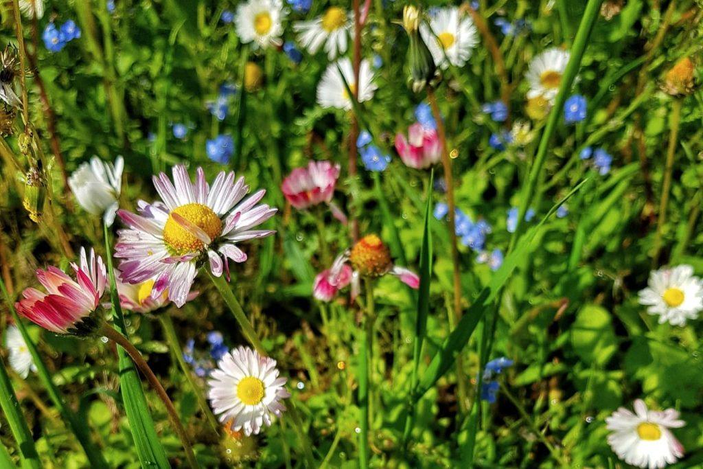 floriile-sarbatoarea-reinvierii-naturii