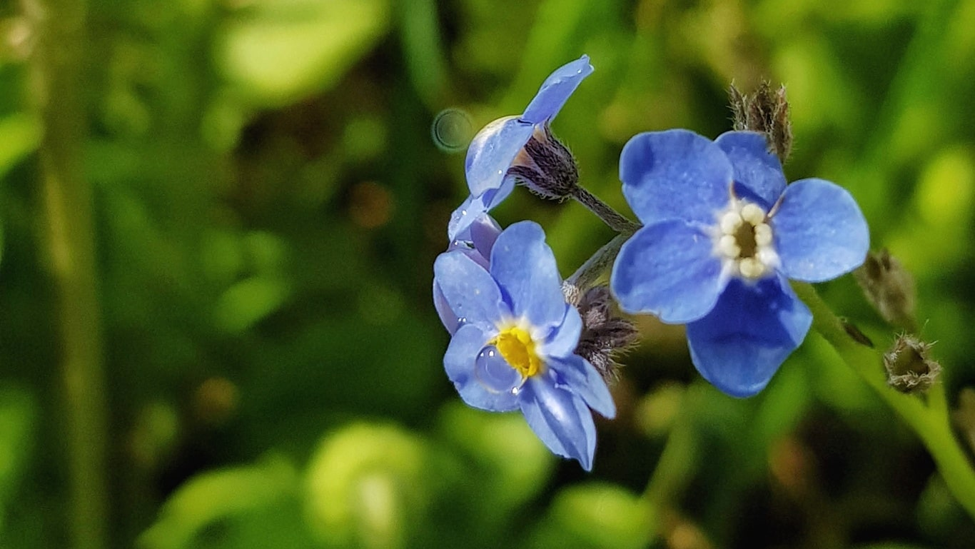 Floriile, sărbătoarea celor cu nume de flori și a renașterii naturii
