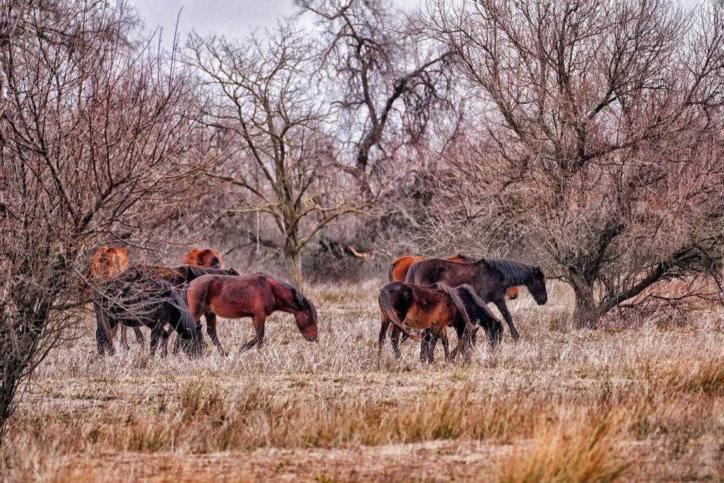 caii-de-la-letea-delta-dunarii