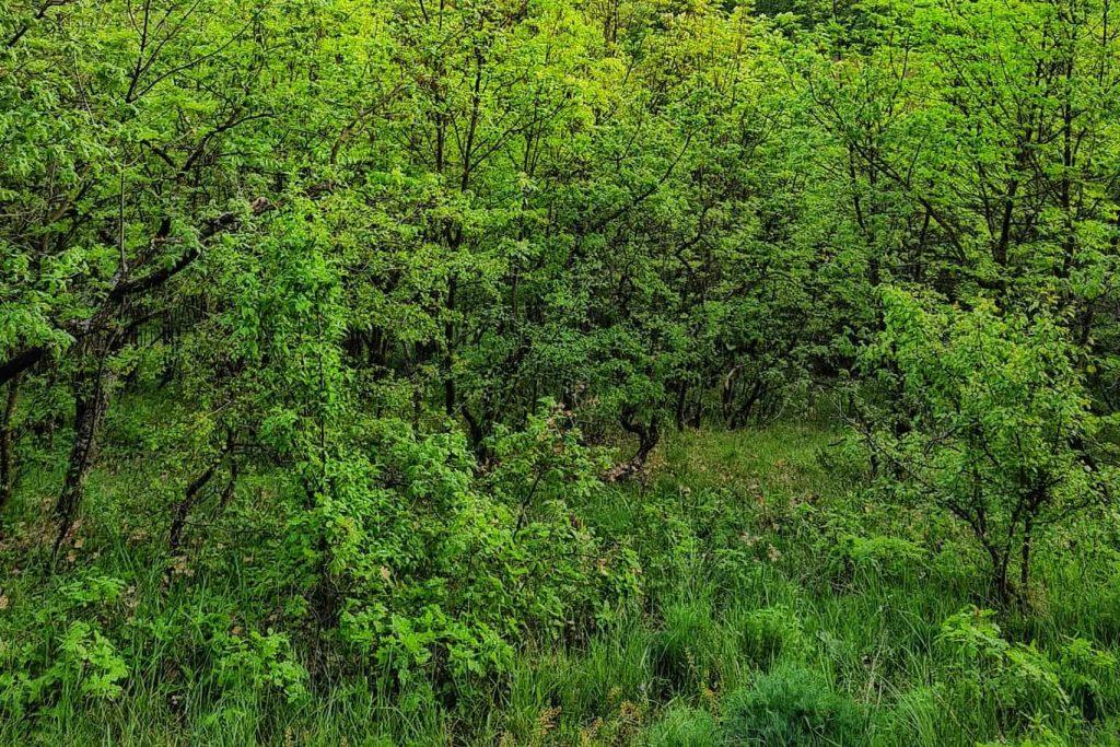 plante-in-muntii-macinului