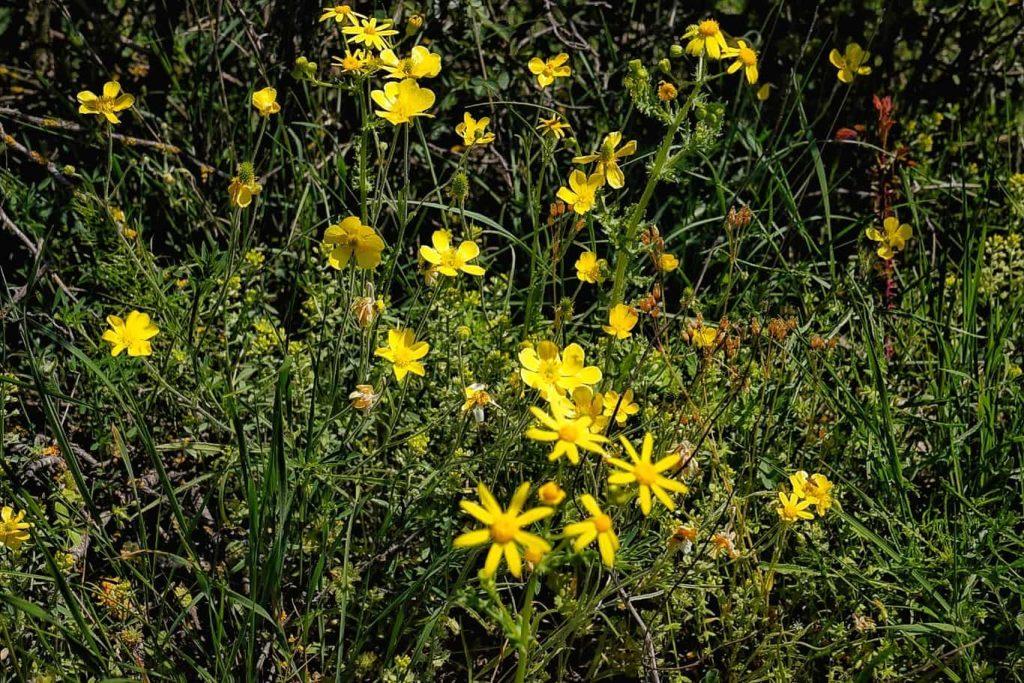 flori-in-rezervatia-naturala-allah-bair-crucea
