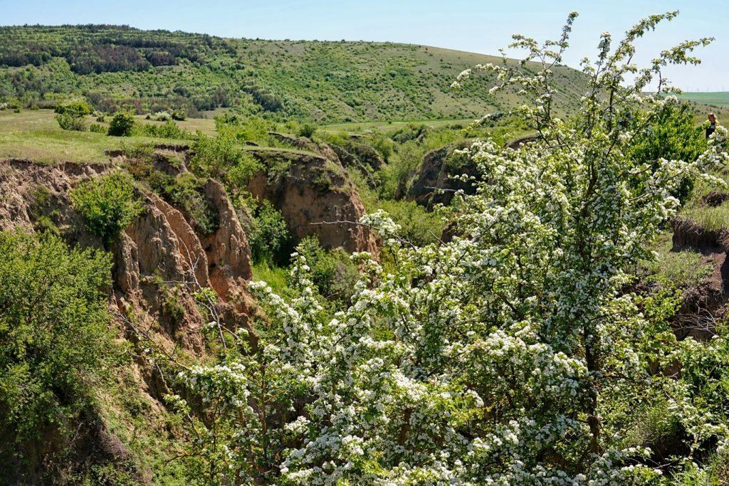 canion-in-rezervatia-naturala-allah-bair-comuna-crucea-judet-constanta