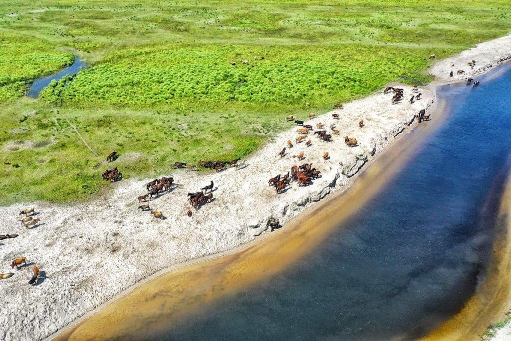descopera-delta-dunarii-agentie-turism-excursii-delta