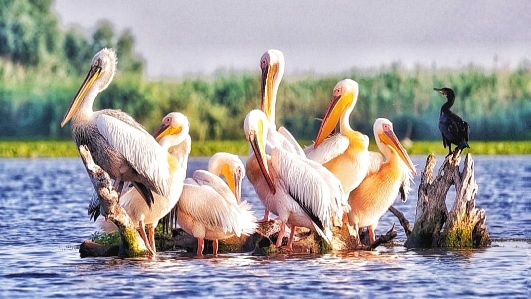 Delta Dunării este magică în orice anotimp. La mulți ani, Deltă minunată!